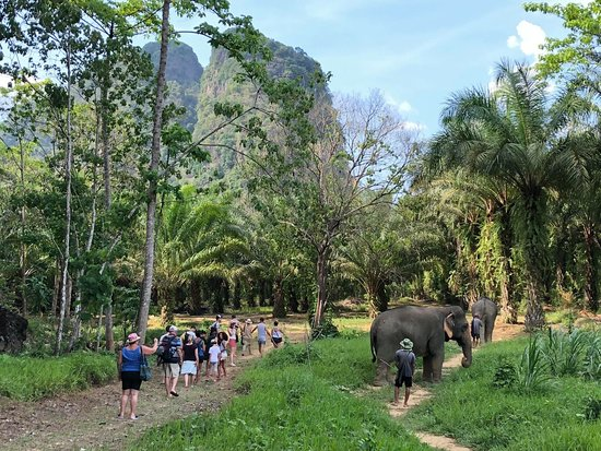 Khao Sok Elephant Sanctuary