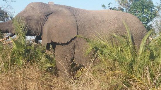Tembe Elephant Park Φωτογραφία