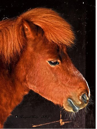 Kinderboerderij Diemen = Pony (Billy)