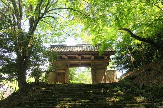 Kora Yamamotobo Trace