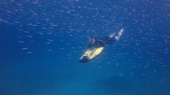 Seabob Aruba Photo