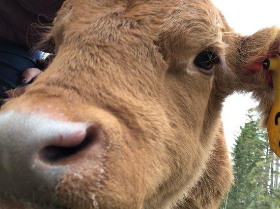 Bridge Lake, Canada: Little Boy Blue's first selfie!