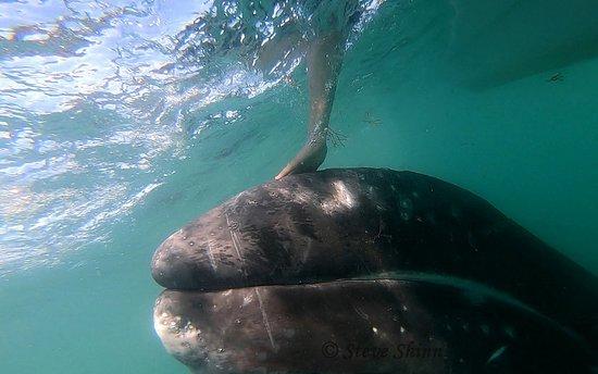 Baja Ecotours: Contact
