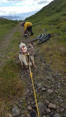 Skridhusky: Bike dog tour is so fun and exsperiens