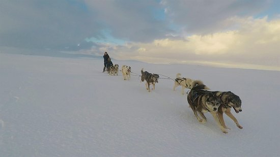 Skridhusky: Cool sleddog tour go too our website and book this tour for next winter in Iceland with 10% dico