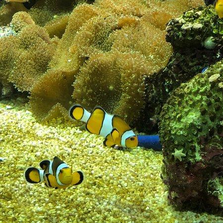 National Aquarium : photo0.jpg