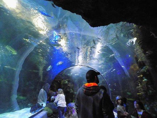 Virginia Aquarium & Marine Science Center: Tunnel of fishes