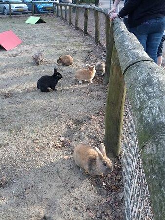Landal Rabbit Hill: Rabbits of Rabbit Hill