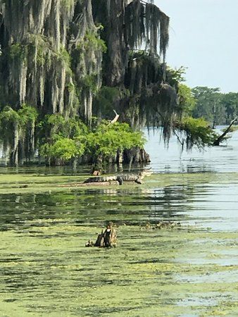 Champagne's Cajun Swamp Tours Photo