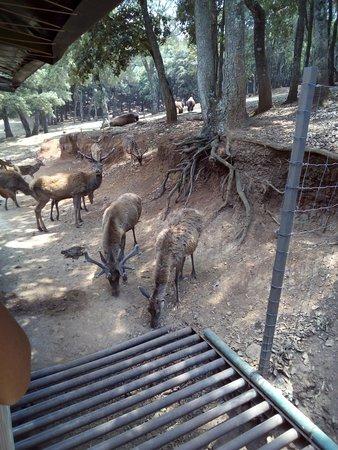Ixtlahuaca de Rayon, Mexico: IMG_20180428_142012_large.jpg