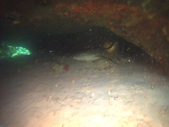Dive It!: sleeping shark