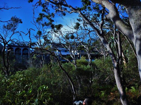 Cremorne Point to Mosman Bay Walk: Suburbia not far away