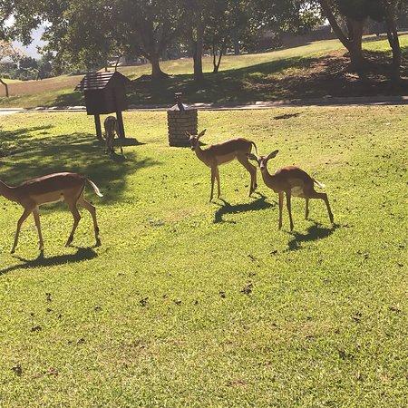 Kruger Park Lodge: photo2.jpg