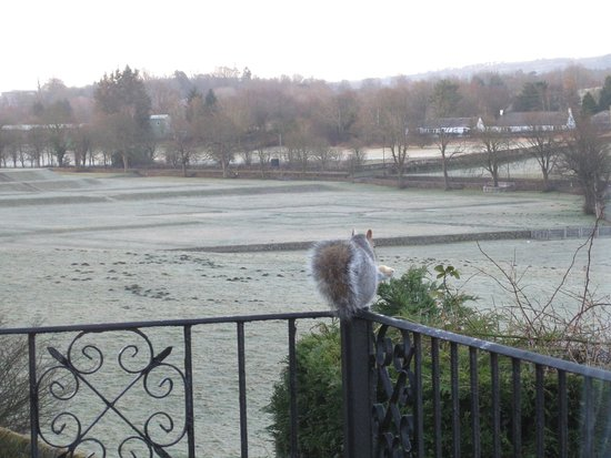 Castlecroft: Our squirrel protector guarding our balcony from foreign invaders.
