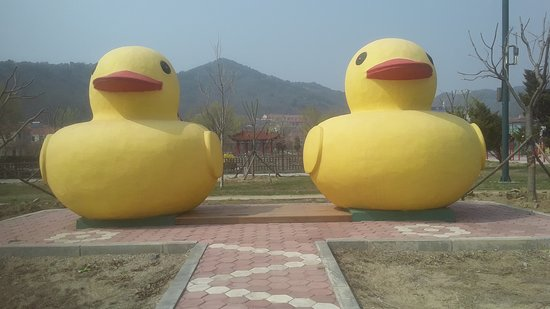Donggang, Çin: Rubber duckies.