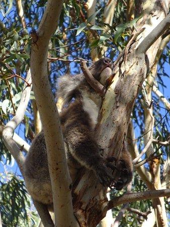 Seddon, Australia: DSC06262_large.jpg