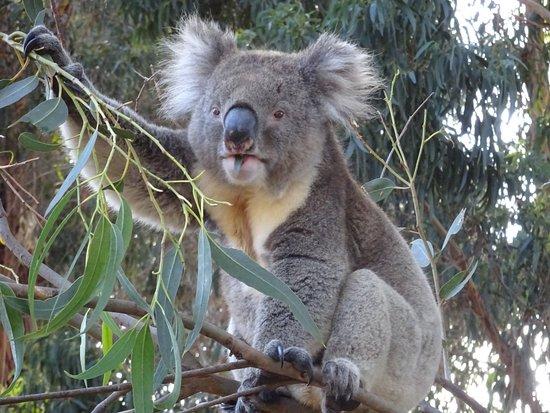 Seddon, Australia: DSC06228_large.jpg