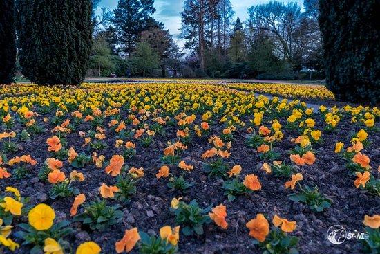 Bunter Garten: Blumenmeer