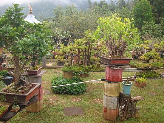 Jardin de Bonsais