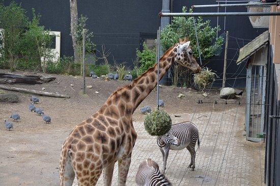 Amersfoort Zoo: IMG-20180428-WA0152_large.jpg