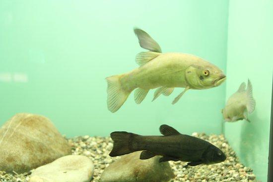 Kastoria Aquarium
