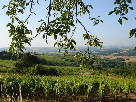 Borgoña, Francia: Le vignoble du Couchois.
