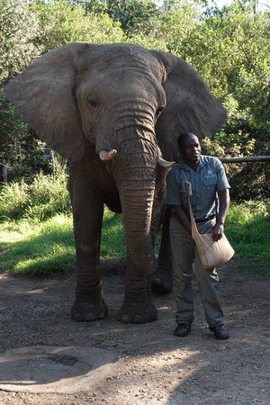 Elephant Sanctuary: Description of the elephant