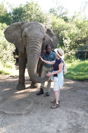 Elephant Sanctuary The Crags: Interaction and learning