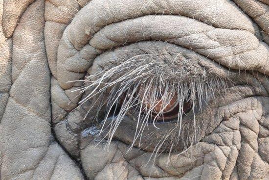 Elephant Sanctuary: Deep joy