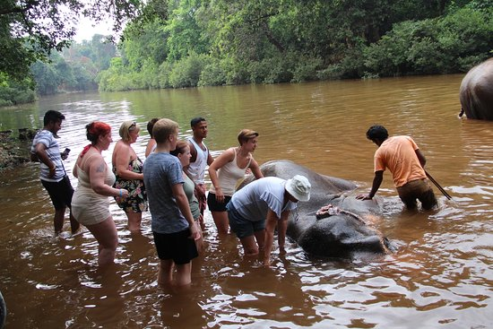Kulem, Indien: Washing the elephants
