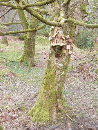 Loch Lomond Faerie Trail照片