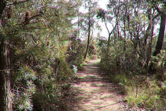 Blackheath, Australia: A 1.4 km trail