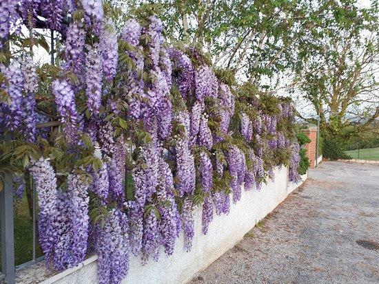 Castiglione della Valle, Italie: 20180424_195212_large.jpg