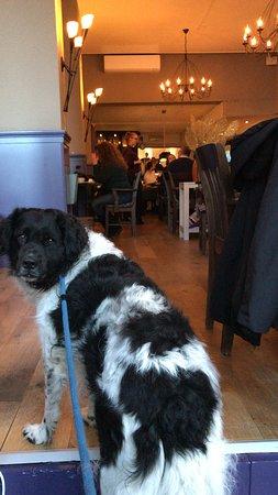 Winschoten, Ολλανδία: Ook mijn hond mocht mee!