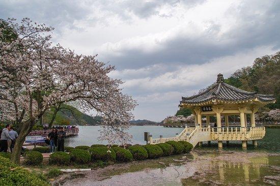 Gumi, Südkorea: So many blooming trees around