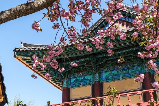 Gimcheon, South Korea: In spring it feels so relaxing being in there