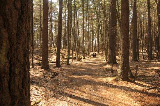 Boylston, แมสซาชูเซตส์: Woods everywhere