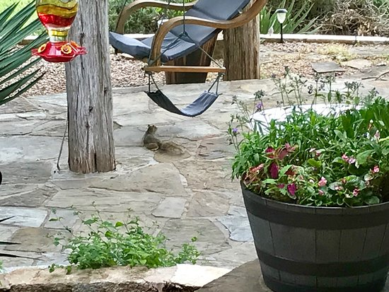 Marble Falls, TX: Even the squirrels are relaxed here!