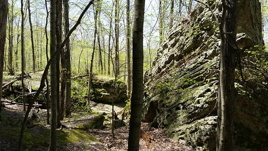 Jackson Falls Trail