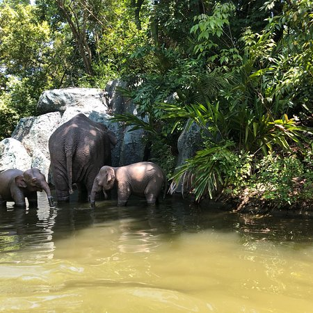 Jungle Cruise Orlando 2019 All You Need To Know Before