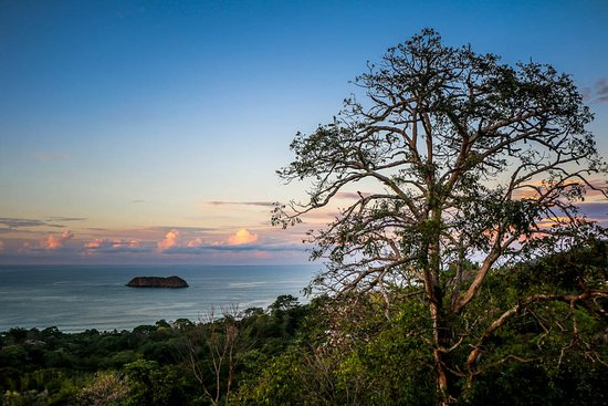 Sí Como No Resort & Wildlife Refuge: Great for photographing birds in tree, listening to howler monkeys & seeing Scarlet Macaws fly b