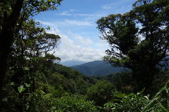 Santa Elena Cloud Forest Reserve: Santa Elena Cloud Forest