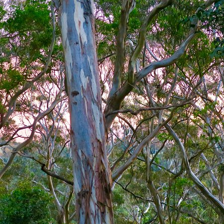 Bunya Mountains, أستراليا: photo6.jpg