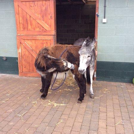 Knottingley, UK: Donkeys