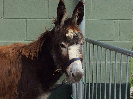 Knottingley, UK: Donkey