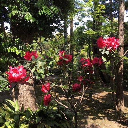 Shibamata Taishakuten (Taishakuten Daikyoji Temple): photo5.jpg