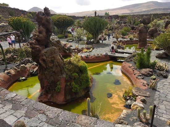 Cactus picture of jardin de cactus guatiza tripadvisor - Jardin de cactus madrid ...
