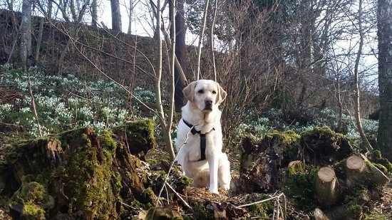 Earlston, UK: Chloe, the family dog on a walk near the B&B