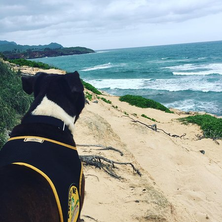 Kauai By Stephanie : Taking a dog from the Humane Society on a field trip