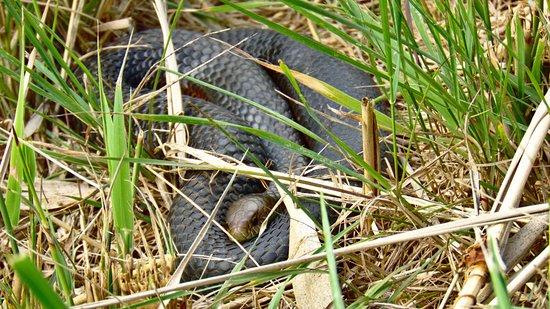 Riverside, Australia: Snake in the grass